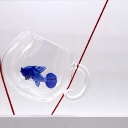 glass fish cup2